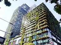 Picture of 3003/1 Carlton St, Chippendale