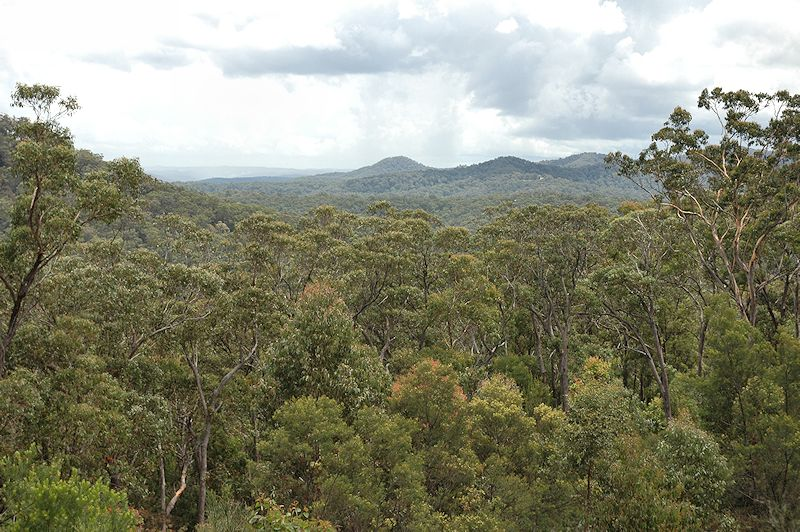 Lot 16 Rocky Creek Road, Wollombi NSW 2325, Image 9