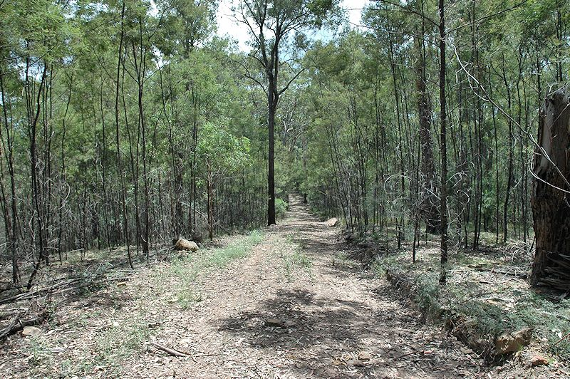 Lot 16 Rocky Creek Road, Wollombi NSW 2325, Image 11