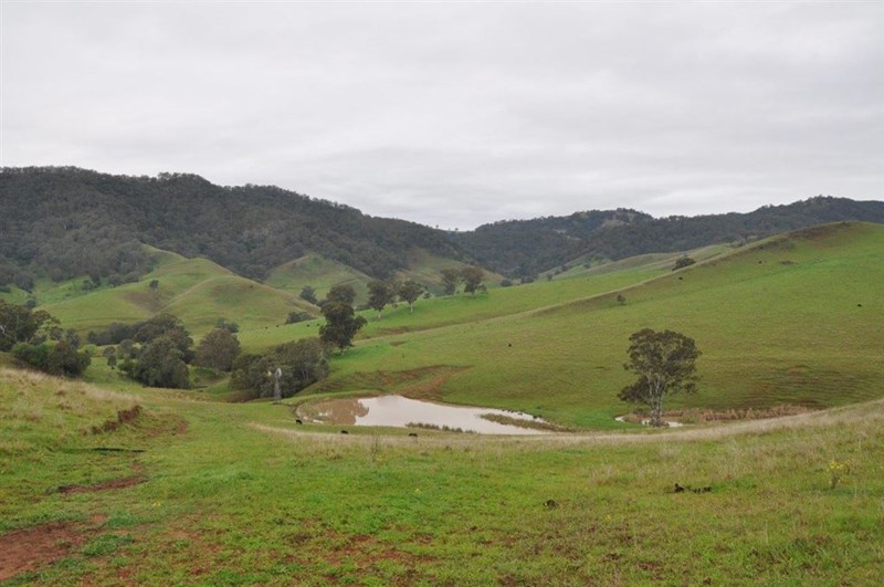 """1662 Sandy Creek Rd, """"Quince Tree"""", McCullys Gap via, Aberdeen NSW 2336, Image 0"""