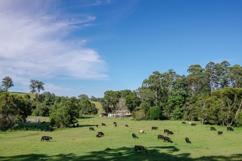 Picture of 86 Nelsons Road, Dungog
