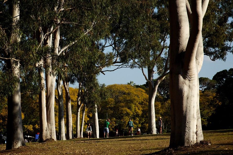 Parramatta location photo #2